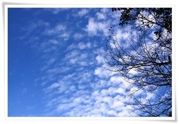 20101119shiki_7.JPG