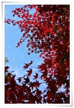 20101119shiki_4.JPG