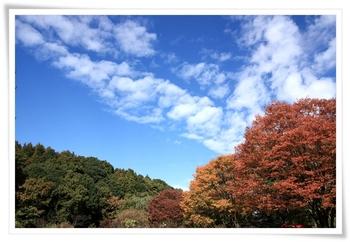 20101119shiki_6.JPG